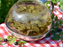 Health herbal tea of bilberry leaves in the kettle Royalty Free Stock Photo