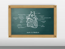 Health and medical concept with heart structure. Stock Images