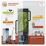 Health And Medical Otolaryngology Anatomy Infographic Stock Photos