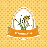 Health and Nature Collection. Citronella Royalty Free Stock Images
