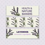 Health and Nature Collection. Lavender. Health and Nature Collection. Banner templates with a herb on spotted seamless background. Lavender - Lavandula royalty free illustration