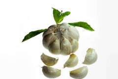 Health from nature garlic. Food is indispensable for garlic Stock Photo