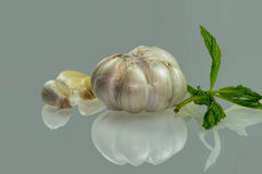 Health from nature garlic. Food is indispensable for garlic Stock Photography