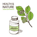 Health and Nature Supplements Collection. Noni Fruit Concentrate  - Morinda Citrifolia Royalty Free Stock Image