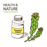 Health and Nature Supplements Collection Royalty Free Stock Images