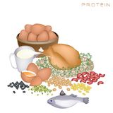 Health and Nutrition Benefits of Protein Foods. Various Kind of Protein Foods to Improve Nutrient Intake and Health Benefits, Protein Is One of The Main Types of vector illustration