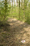 Health path in forest Stock Images