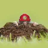 Health and safety mole. Wearing a red miners hardhat / helmet and lamp Royalty Free Stock Images