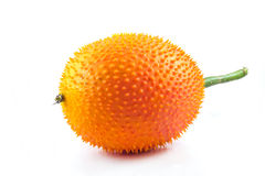 Health sweet gourd Royalty Free Stock Image