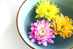 Health and wellbeing. A bowl of floral scented water, with floating chrysanthemums in turquoise bowl, with copyspace Royalty Free Stock Images