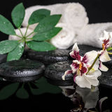Healthcare concept of orchid Cambria flower, green leaf shefler Stock Photo