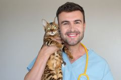Healthcare worker examining cat with kindness.  Royalty Free Stock Image