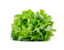Healthful bright green lettuce, isolated on a white background Conceito orgânico, cru, fresco e saboroso fotos de stock royalty free