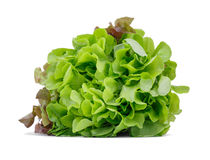 Healthful bright green lettuce, isolated on a white background Conceito orgânico, cru, fresco e saboroso fotos de stock