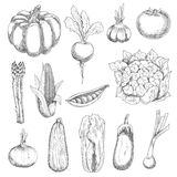 Healthful fresh vegetables engraving sketches Stock Photos