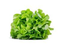 Healthful ljust - grön grönsallat som isoleras på en vit bakgrund Organiskt, rått, nytt och smakligt begrepp royaltyfria foton