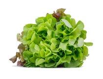 Healthful ljust - grön grönsallat som isoleras på en vit bakgrund Organiskt, rått, nytt och smakligt begrepp arkivfoton