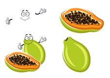 Healthful tropical cartoon papaya fruit. Healthful tropical papaya fruit with green peel, sweet and juicy orange pulp and small black seeds. Exotic recipe or Stock Photos
