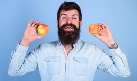 Healthy alternative. Man bearded smiling holds apples in hands blue background. Totally healthy nutrition concept. Healthcare dieting vitamin nutrition. Apples royalty free stock image