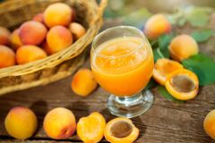 Healthy apricot juice in glass. With fresh apricots on the table royalty free stock photography