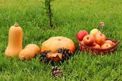 Healthy autumn food on green grass. stock images