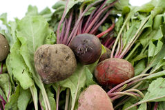 Healthy beets Royalty Free Stock Image