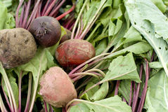 Healthy beets Stock Image