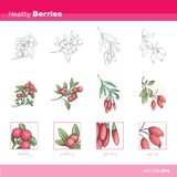 Healthy berries Royalty Free Stock Images