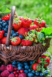 Healthy berry fruits in garden Stock Photography