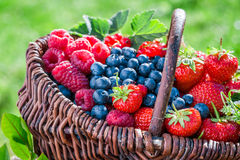 Healthy berry fruits in sunny day Stock Photos