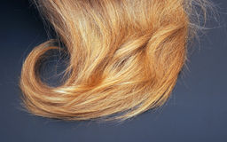 Healthy blond hair Stock Images