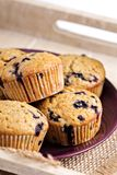 Healthy blueberry banana muffins Royalty Free Stock Image