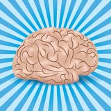 Healthy brain on a blue background with lines. Healthy brain (with gyruses) on a blue background with lines Stock Illustration