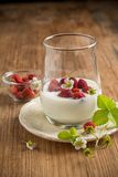 Healthy breakfast cup of fresh milk yoghurt with Stock Photography