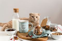 Healthy breakfast with a cute cat. Raisins, cranberries and hazelnuts served with almond milk on a white linen table cloth. Side stock photo