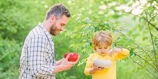 Healthy breakfast. Father son eat food. Little boy and dad eat. Nutrition kids and adults. Tasty porridge. Organic royalty free stock image