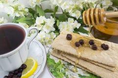 Healthy breakfast with honey and chokeberry tea Stock Photos