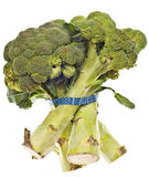 Healthy Broccoli Stalks Stock Photo