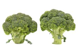 Healthy brocoli. Royalty Free Stock Image