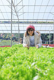 Healthy care woman in hydroponic vegetable green house plantatio Stock Photo