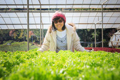 Healthy care woman in hydroponic vegetable green house plantatio Stock Photos