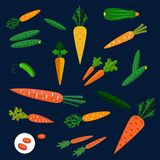 Healthy carrot and cucumber flat vegetables Stock Image