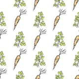 Healthy Carrot and Parsley Sprig Seamless Pattern. Crispy vegetable and bushy herb vector illustrations formed in endless texture Stock Photography