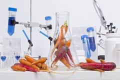 Healthy Carrots Stock Photos