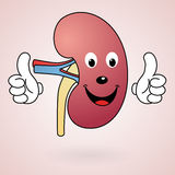 Healthy Cartoon Kidney Stock Photo