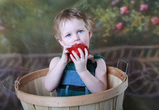 Healthy Child. Young Boy Eating Healthy Red Apple sitting in apple basket royalty free stock image