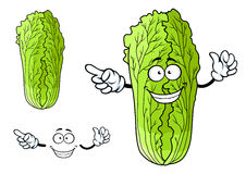 Healthy chinese character cabbage with happy face Stock Photos