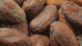 Healthy cocoa seeds on wooden table. Macro view. Concept of healthy food. stock video footage
