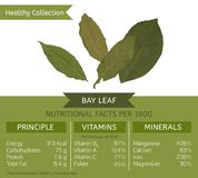 Healthy Collection Bay Leaf. The bay leaf health benefits. Vector illustration with useful nutritional facts. Essential vitamins and minerals in healthy food Royalty Free Stock Photos