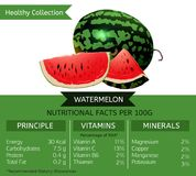 Healthy Collection Watermelon vector illustration